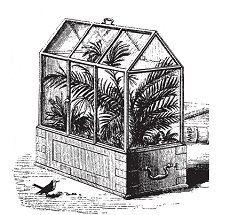 Ящик Уорда, или флорариум