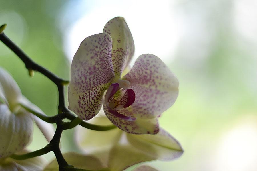 Может ли специалист по разведению орхидей написать книгу о работе...