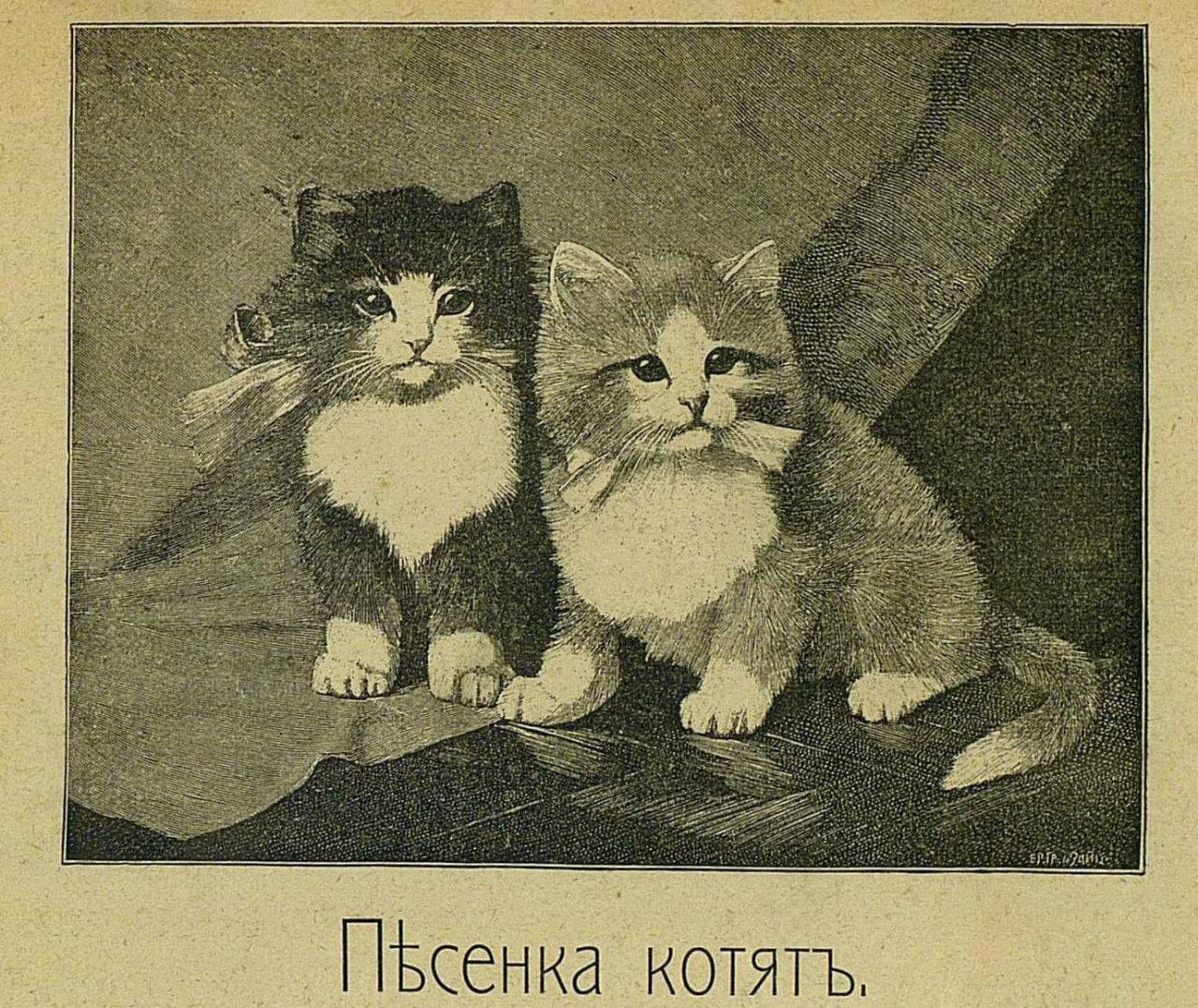 pesenka-kotyat-odinoki-my-na-svete-no-nas-ocheny-lyubyat-deti-nas-umeet