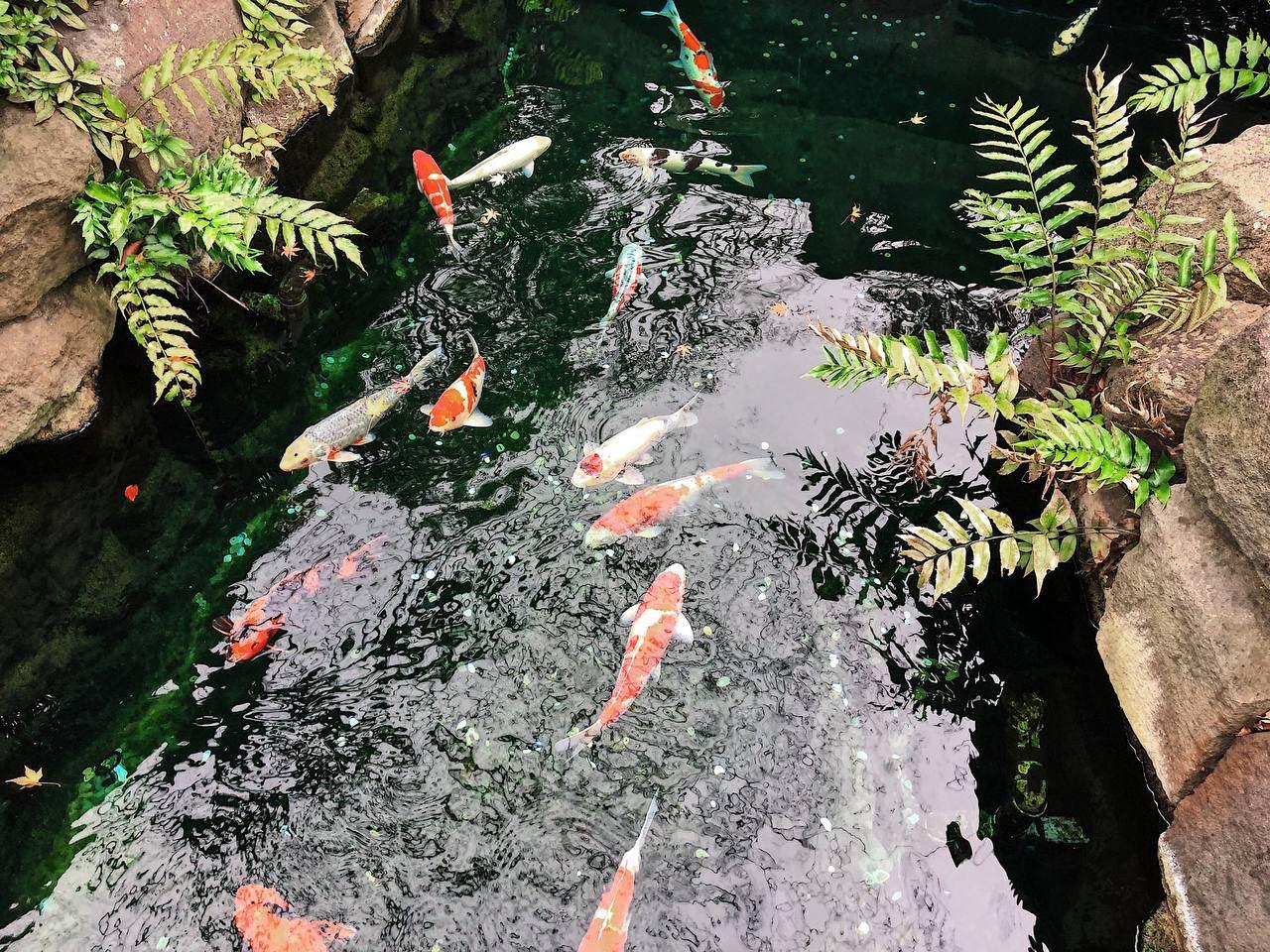 Про рыб  Рыбы не живут без воды, Рыбы не оставляют следы, Не ищут почвы под...