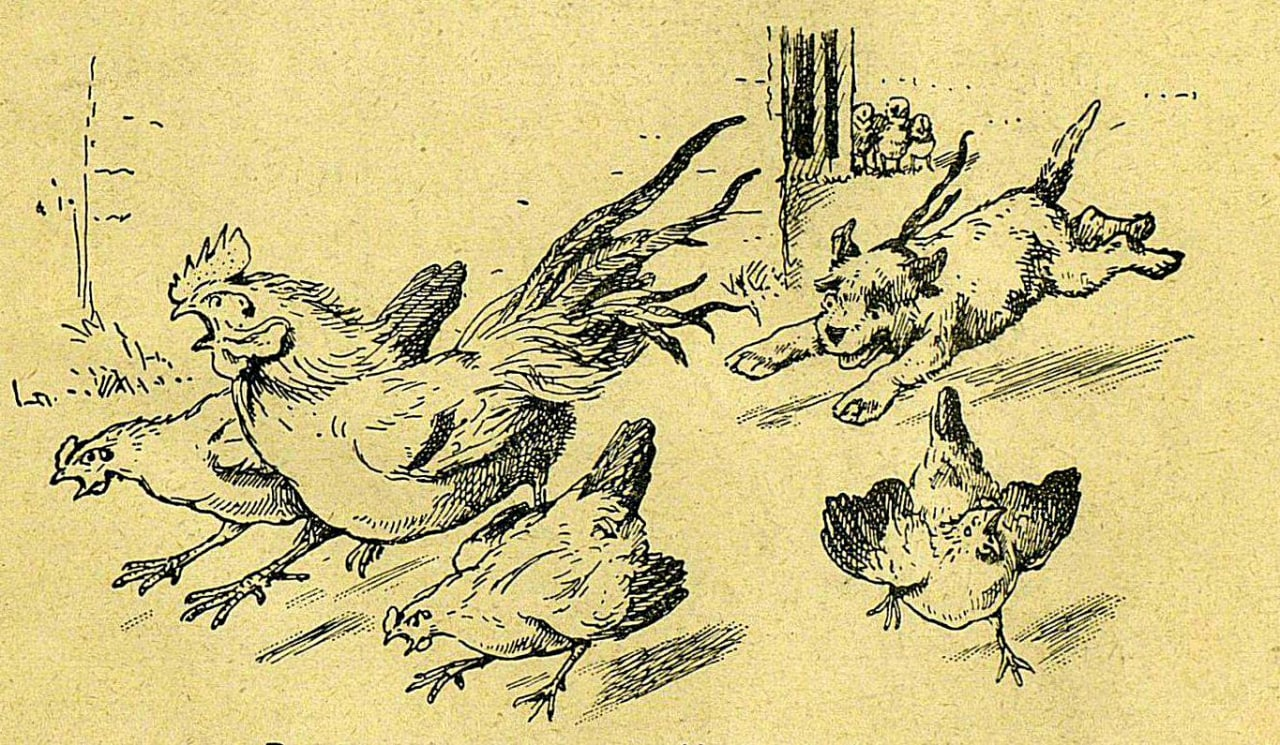 Кудлашка  Во всю прыть летит Кудлашка, Птичий двор, как зверь, пугает, Петуха...