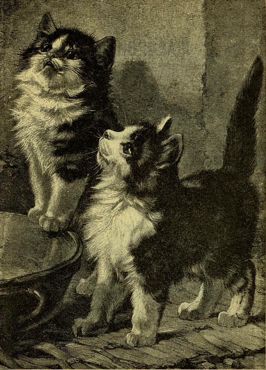 Журнал «Малютка», 1901 год.   котики