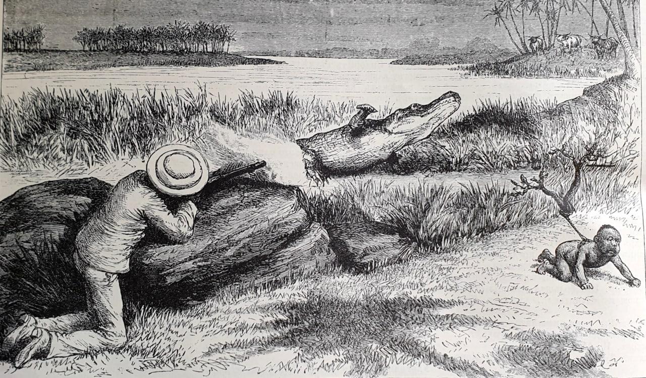 Охота на крокодилов на острове Цейлон  Помещаем набросок английского генерала...