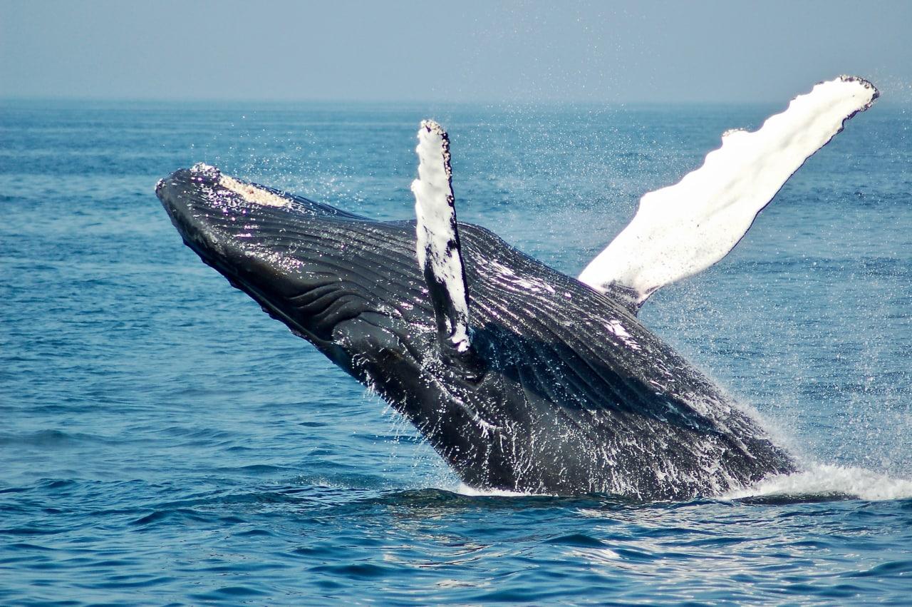 Самый одинокий кит в мире  Самая популярная история, связанная с китами и...