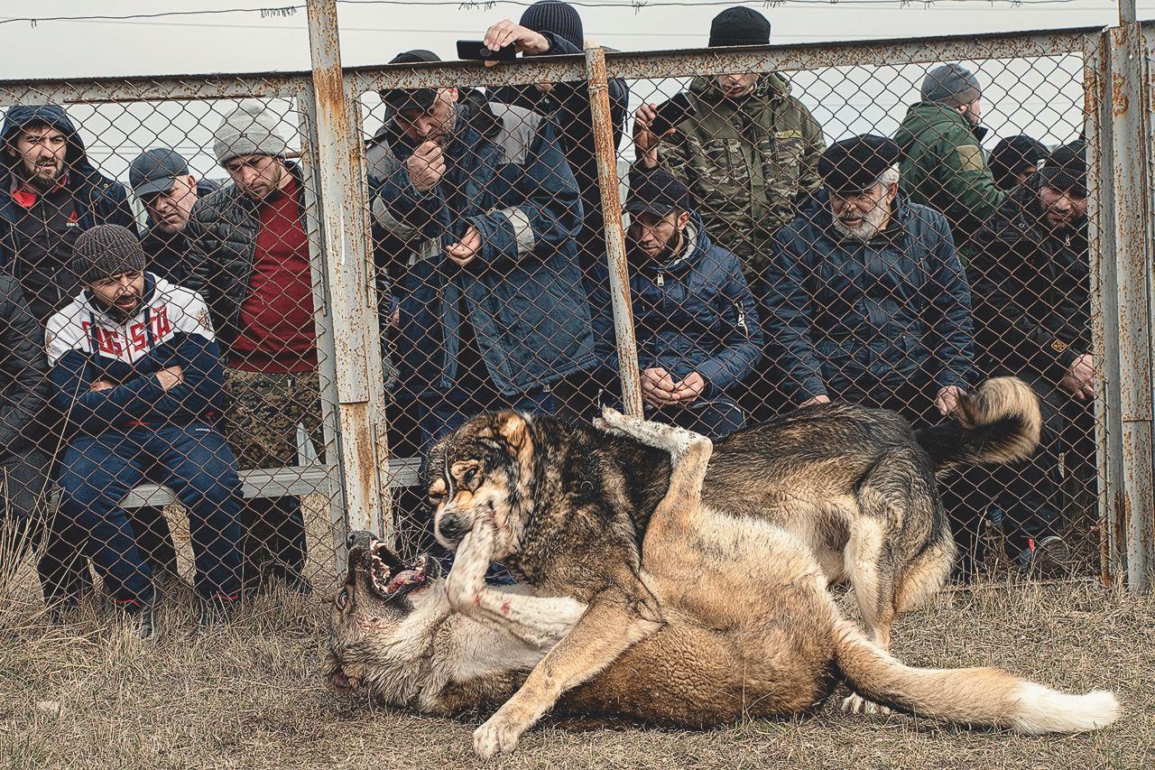 """""""В Дагестане борьба — практически национальная идея. Культ борьбы..."""