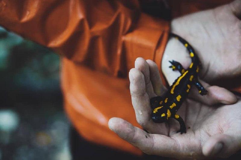  Карел Чапек «Война с саламандрами»  Рейтинг: 7/10  ️Карел Чапек — чешский...